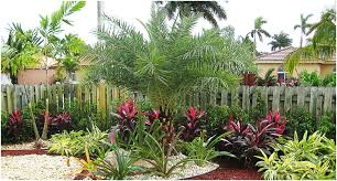 backyards appealing florida tropical landscaping ideas front