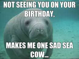 Funny Cow Memes - sea cow meme cow best of the funny meme