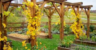 pergola grape vine trellis engaging vine trellis systems