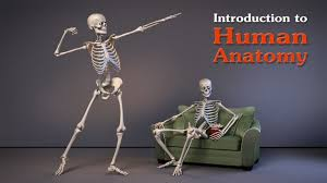 introduction to human anatomy image collections learn human