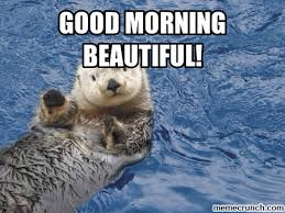 Good Morning Beautiful Meme - morning beautiful
