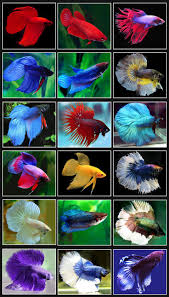 Beautiful Home Fish Tanks by 199 Best Breath Taking Aquariums Images On Pinterest Aquarium