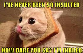 Random Cat Meme - image 476940 cat breading know your meme