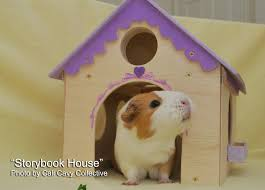 cali cavy collective a blog about all things guinea pig wooden