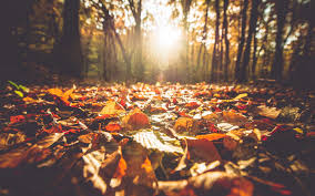 quotes about fall in ny fall instagram photo caption ideas travel leisure