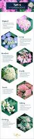 plants native to france types of hydrangeas a visual guide ftd com