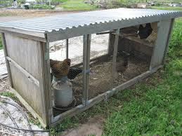 diy chicken coop chickens need more protection did you see the