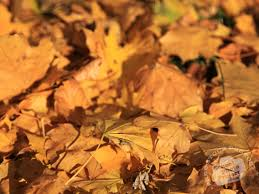 Texture Home Decor Autumn Leaves Free Stock Photo Image Picture Decomposed Leaf Dried