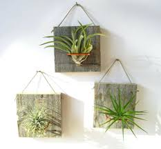articles with small potted plants for office tag small plants for