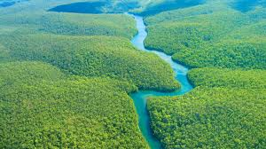 amazon rainforest travel guide
