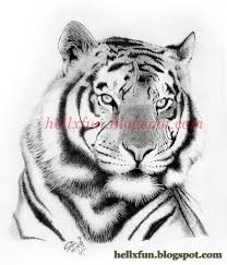 drawings of tigers drawing tiger drawings movies and more
