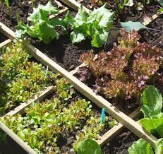 how to start a vegetable garden for beginners easy vegetables for beginning gardeners