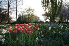 can i plant my easter bulbs outside tips on lilies daffodils and