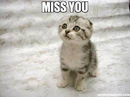 Miss You Meme - miss you meme sad cat 7300 memeshappen