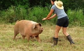 roast pig the flavor chronicles