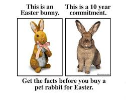 Chocolate Bunny Meme - rabbit ramblings monday meme day rabbits at risk for easter part 2
