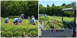 Botanical Gardens Volunteer by Carmax Cares For Our Garden Lewis Ginter Botanical Garden