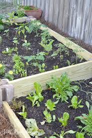 Rock Dust Gardening Organic Gardening Miracle Grow Garden Soil Bone Meal Fertilizer