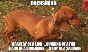 Wiener Dog Meme - 8 funny dachshund memes this one is horribly roached don t buy or
