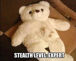 Teddy Meme - lolcats teddy bear lol at funny cat memes funny cat pictures