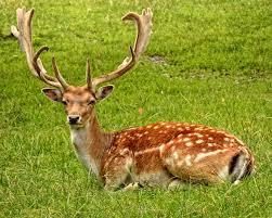 deer pictures pexels free stock photos