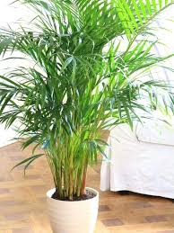 indoor plants that need no light best indoor plants no light ubound co