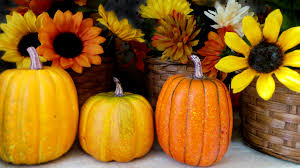halloween background pumpkin free images fall flower decoration orange food produce
