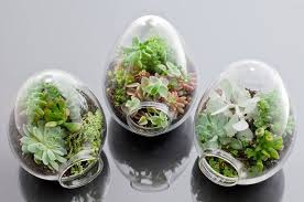 open terrarium plants caring for your terrarium ebay design