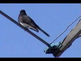 California Backyard Birds by Birds Compilation 1 Southern California Youtube