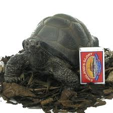 pet pals baby tortoise resin garden ornament 8 99