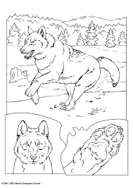 wolf coloring animals town animal color sheets wolf picture