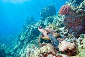 the animals of the great barrier reef