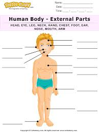 name of human body parts worksheet turtle diary