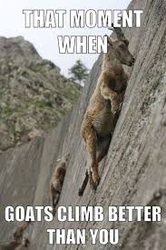Rock Climbing Memes - 9cab11a31323c6f7a17efb48df18b2c1 jpg 736纓1104 climbing pinterest