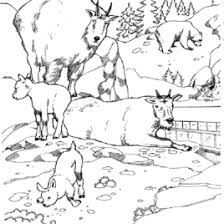 printable arctic animal coloring pages u2013 coloring pages now