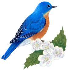 Flower And Bird - missouri state bird and flower bluebird sialia sialis