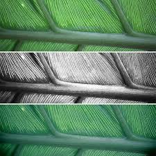 green creative lighting rep canon eos 4000d fotoaparatai canon lietuvos