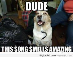 Stoned Dogs Meme - pin by danny hanna on the stoned dog meme collection pinterest meme