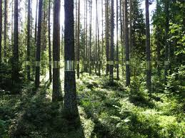 clear cut a mirrored forest installation colossal
