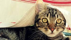 halloween kitten wallpaper cats outdoors grass cats kittens funny cat wallpaper for desktop