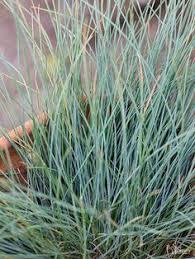 Best Plants For Rock Gardens Best Plants For Rock Gardens Rock Garden Plants Perennials And