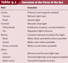 Anatomy And Physiology Place Anatomy And Physiology Of The Eye Functions Of The Parts Of The Eye