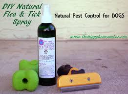 diy natural flea u0026 tick spray natural pest control for dogs