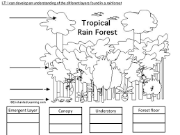 rainforest activity pack by edbentham teaching resources tes