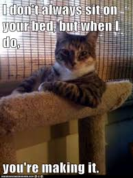 Animal In Bed Meme - animal memes the most interesting cat in the world this mattress