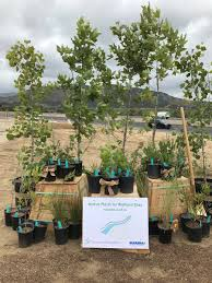 recon native plants caltrans san diego on twitter