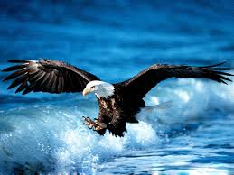 american eagles wallpapers images pics page 24