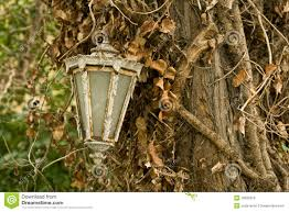 Hanging Tree Lights by Old Lamp Hanging On Tree Royalty Free Stock Images Image 16695979