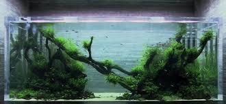 amano aquascape takashi amano aquascaping gourou meurt 罌 l 罎ge de 61 ans