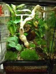 Vivarium Wood Decor Planted Vivarium For Baby Crested Geckos Home Decor Pinterest